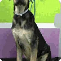 Adopt A Pet :: Otis - Fort Collins, CO
