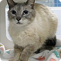 Adopt A Pet :: Smokey - Topeka, KS