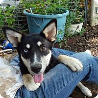 Adopt A Pet :: Sabrina - Memphis, TN