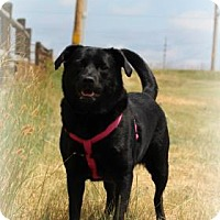 Adopt A Pet :: Riley - Cheyenne, WY