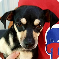 Adopt A Pet :: Cherie - Andalusia, PA