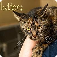 Adopt A Pet :: Flutter - Somerset, PA