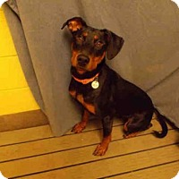 Adopt A Pet :: *OPRAH - Upper Marlboro, MD