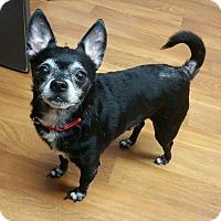 Adopt A Pet :: Tippy - Lisbon, OH