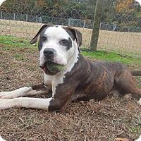 Adopt A Pet :: Diseal - Newport, NC