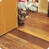 Adopt A Pet :: Luna - St. Louis, MO
