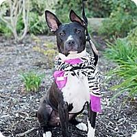 Adopt A Pet :: Flower - Redondo Beach, CA
