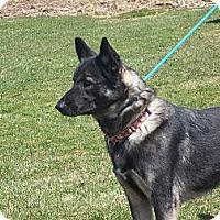 Adopt A Pet :: DOZER - Tully, NY