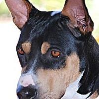 Adopt A Pet :: Kara - Scottsdale, AZ