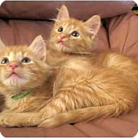 Adopt A Pet :: Beatrice & Amelia - Alexandria, VA