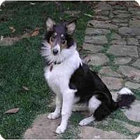 Adopt A Pet :: Snickers - Gardena, CA