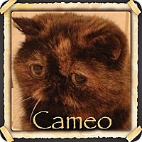Adopt A Pet :: Cameo - Beverly Hills, CA