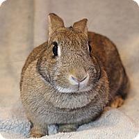 Adopt A Pet :: Annabelle - Hillside, NJ