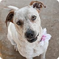 Adopt A Pet :: Reba - Tanner, AL