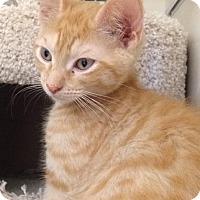 Adopt A Pet :: Dixie - Stafford, VA