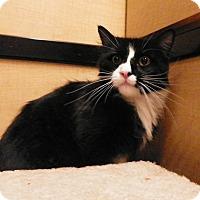 Adopt A Pet :: Sylvester - Riverside, CA