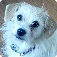 Adopt A Pet :: Emma - Allentown, PA