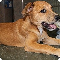 Adopt A Pet :: Hattie - Weeki Wachee, FL