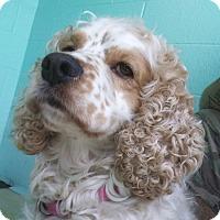 Adopt A Pet :: Toby - Kannapolis, NC
