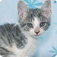 Adopt A Pet :: Alex - Elmwood Park, NJ