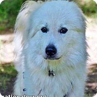 Adopt A Pet :: Waylon in CT - new! - Beacon, NY