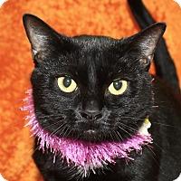 Adopt A Pet :: Sassy - Jackson, MI