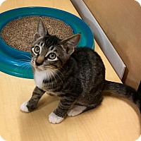 Adopt A Pet :: Murtagh - East Brunswick, NJ