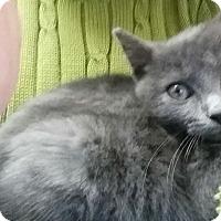 Adopt A Pet :: Jeulia - Chicago, IL