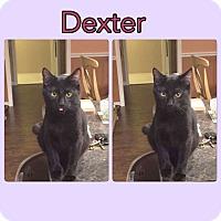 Adopt A Pet :: Dexter - Arlington/Ft Worth, TX