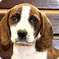 Adopt A Pet :: Mike - Glastonbury, CT