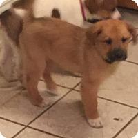 Adopt A Pet :: Rubble - Lancaster, KY