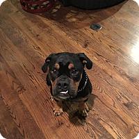 Adopt A Pet :: Doobie - Norwood, GA