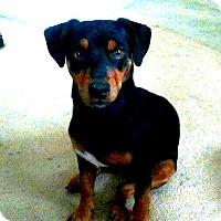 Adopt A Pet :: Clint - Holland, OH