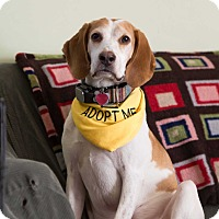 Adopt A Pet :: Lil Joe - Washington, DC