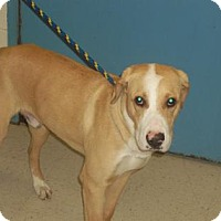 Adopt A Pet :: Churchill(Foster Hero Needed.URI) - Gulfport, MS