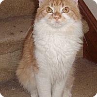 Adopt A Pet :: Randall - Germansville, PA