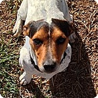 Adopt A Pet :: Sampson in Midland - Midland, TX