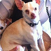 Adopt A Pet :: Miky - Vaudreuil-Dorion, QC