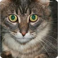 Adopt A Pet :: Aubrey - St. Louis, MO