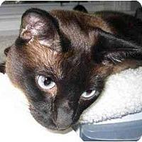 Adopt A Pet :: Baron - Davis, CA