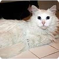 Adopt A Pet :: Harrison & Harley - Arlington, VA