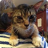 Adopt A Pet :: Chevy - Pace, FL