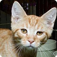 Adopt A Pet :: Ari M - Sacramento, CA
