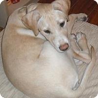 Adopt A Pet :: Serenity - Saskatoon, SK