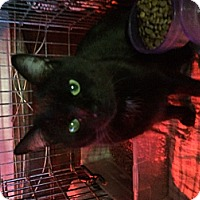 Adopt A Pet :: Panther - Clay, NY