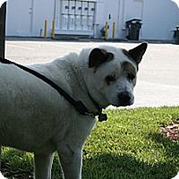 Adopt A Pet :: Bannin - Virginia Beach, VA