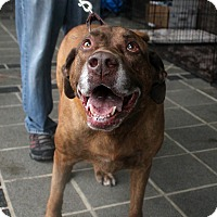 Adopt A Pet :: Cooper - Richmond, VA