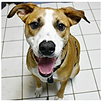 Adopt A Pet :: Dempsey - Forked River, NJ