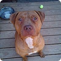 Adopt A Pet :: Atreyu - Kimberton, PA