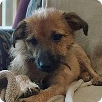 Adopt A Pet :: BENNETT - Paron, AR